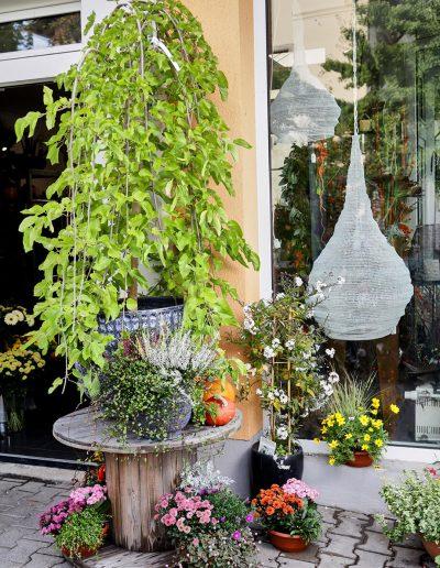 herbstdeko-pflanzen-freianlage-blumenladen-boehme
