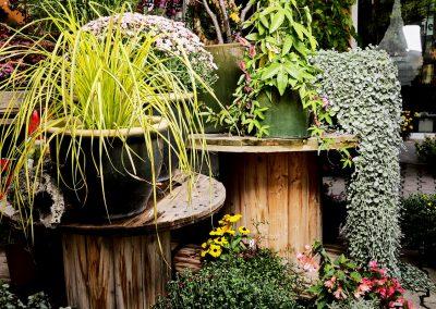 immer-gruen-pflanzen-gaertnerei-blumenladen-boehme