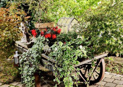 immer-gruen-pflanzen-gartenanlage-blumenladen-boehme