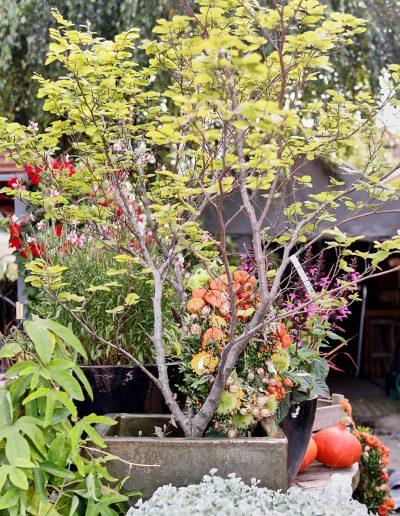 pflanzenbegruenung-baeume-gartenpflanzen-blumenhaus-boehme