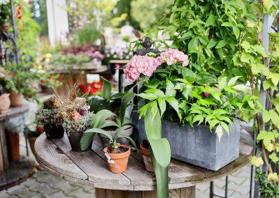 pflanzenbegruenung-gartenpflanzen-blumen-boehme