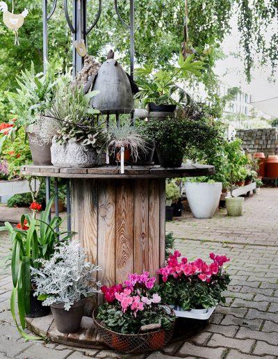 pflanzenbegruenung-pflanzen-garten-blumenhalle-boehme