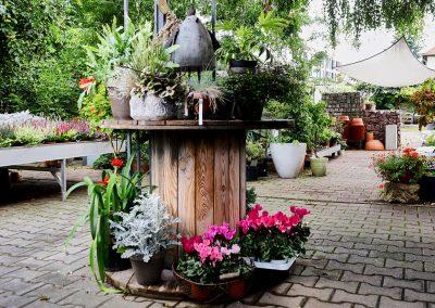 pflanzenbegruenung-pflanzen-garten-blumenhalle-boehme-freianlage