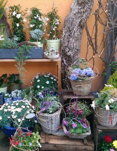 Gartenblumen-Gartenpflanzen-Blumen-Blumengeschaeft-boehme-dresden-ost
