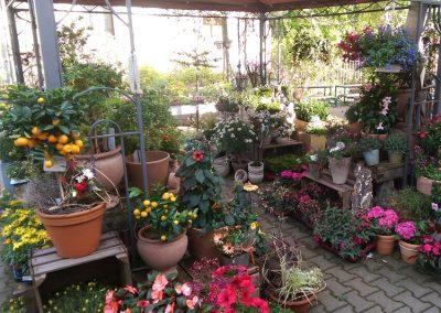 Gartenblumen-Pflanzen-Blumen-Freianlage-Blumenladen-boehme-dresden-ost