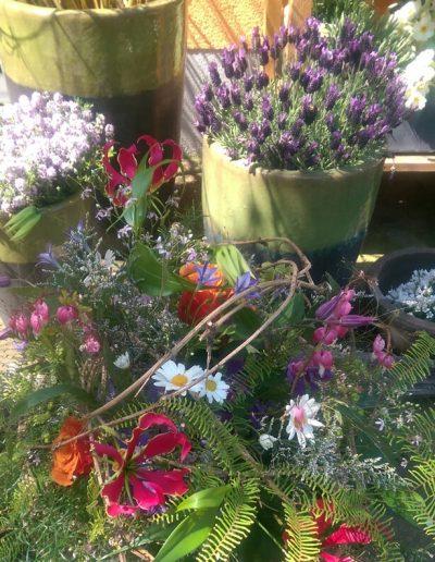 Gartenpflanzen-Freianlage-Gartenideen-Blumengeschaeft-boehme-dresden-ost