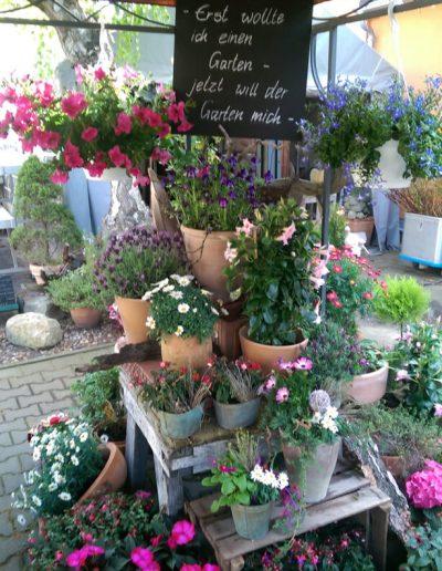 Gartenpflanzen-Freianlage-Gartenideen-Blumenladen-boehme-dresden-ost