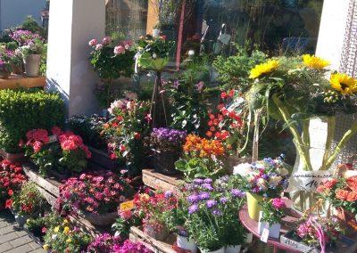 bunter-Blumenstrauss-Muttertag-Frauentag-Geburtstag-Blumenhalle-Boehme-Dresden-Ost-Tolkewitz