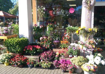 frische-Blumen-Muttertag-Frauentag-Blumenhalle-Boehme-Dresden-Ost