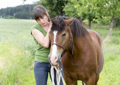 Physiotherapie-Zobel-sucht-Pferde-Reit-und-Pflegebeteiligung-Dresden-Oberpoyritz-Pillnitz